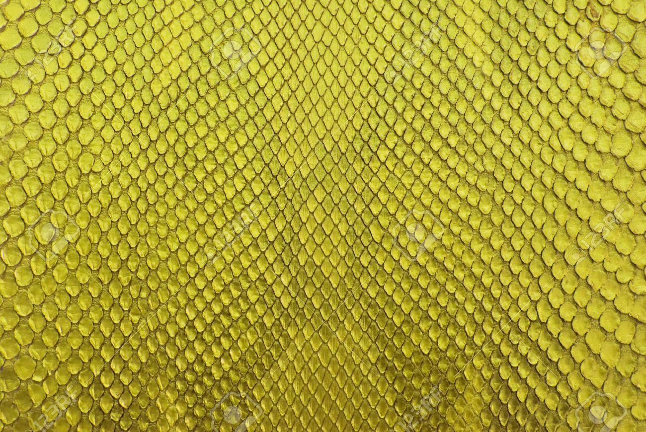 Yellow python snake skin texture background. Stock Photo - 11881971