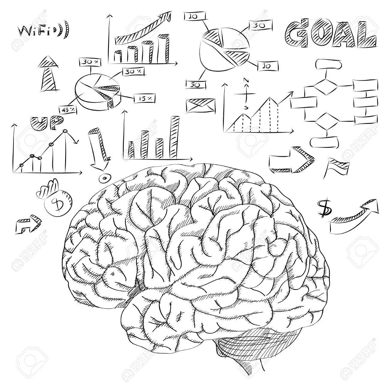 Cerebro Humano Con Diagrama De Infografía De Negocios Y Tecnología ...