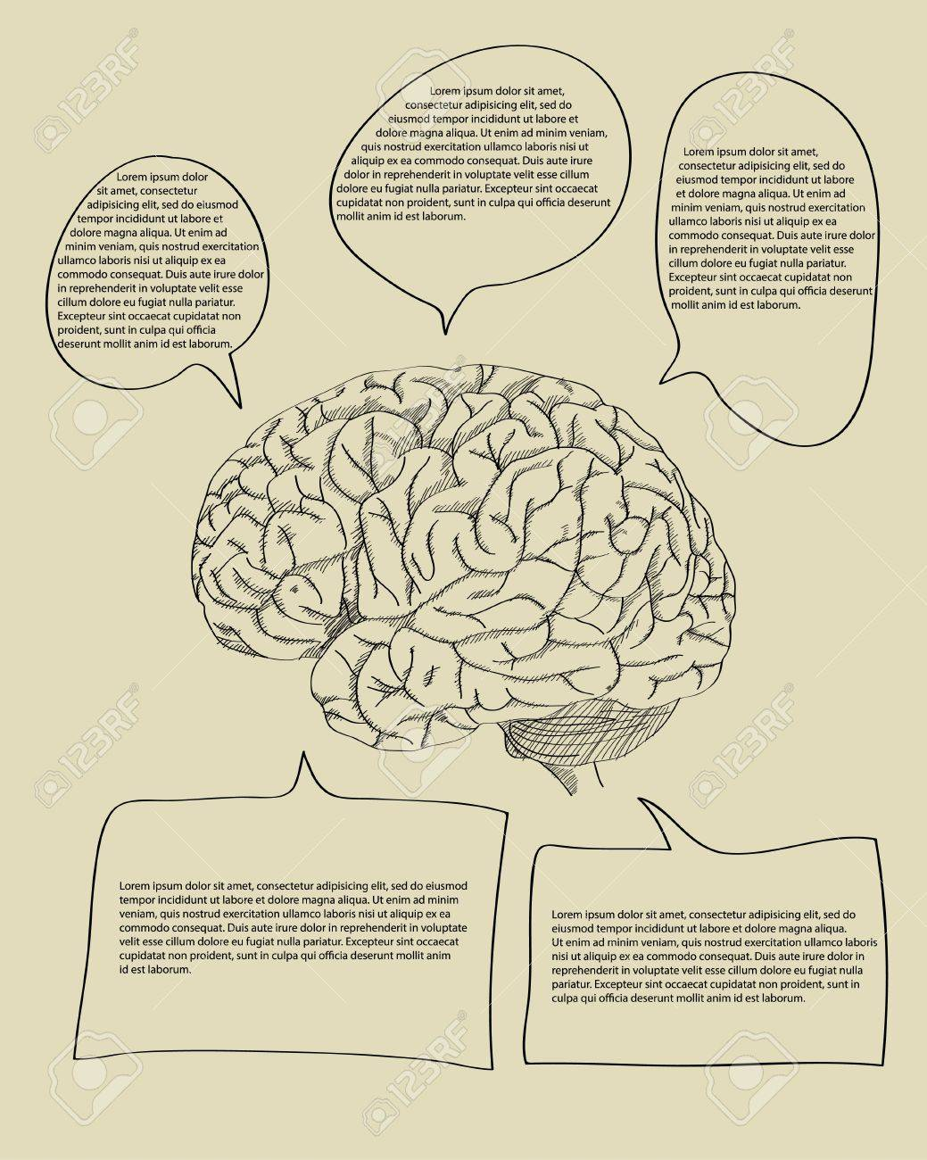 Cerebro Humano Con El Diagrama Banner Infografía De Negocios Y ...