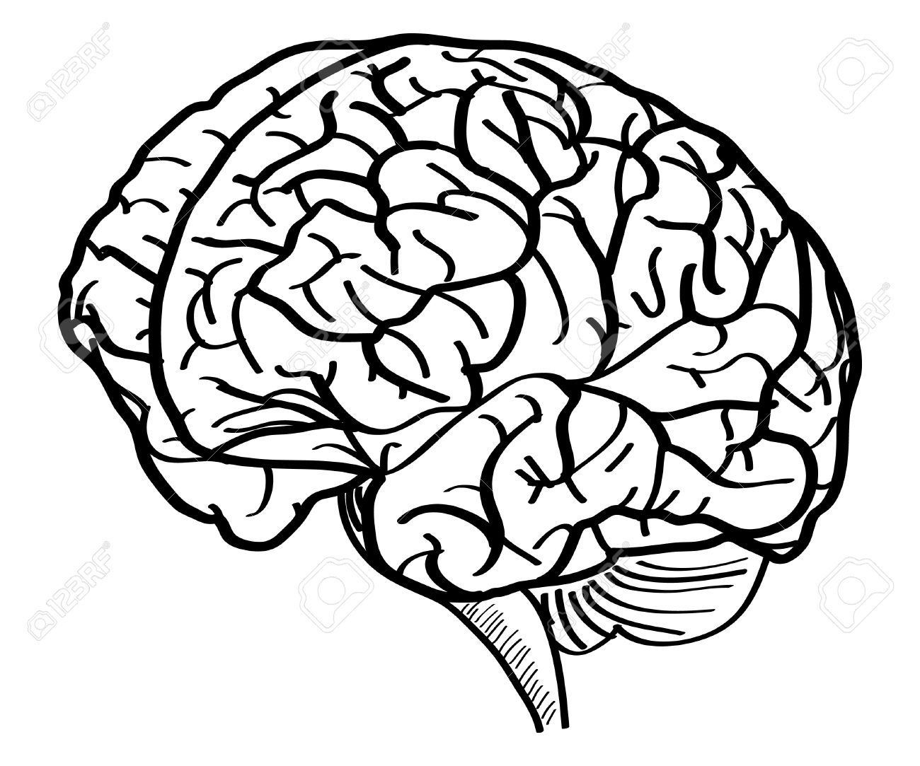 human brain vector outline sketched up vector illustration royalty rh 123rf com free brain vector art