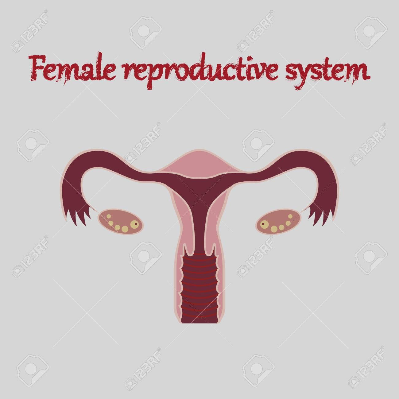 Icono De órganos Humanos En El Sistema Reproductivo Femenino Estilo ...