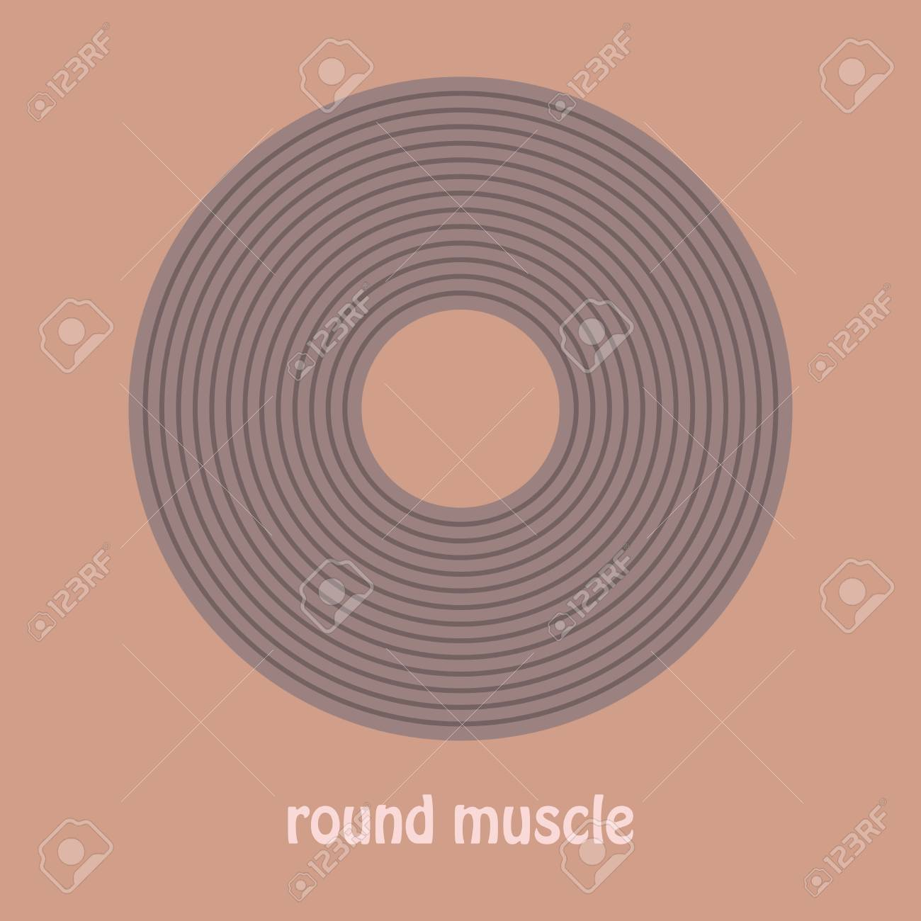Illustration Of Structure Skeletal Muscle Anatomy Royalty Free