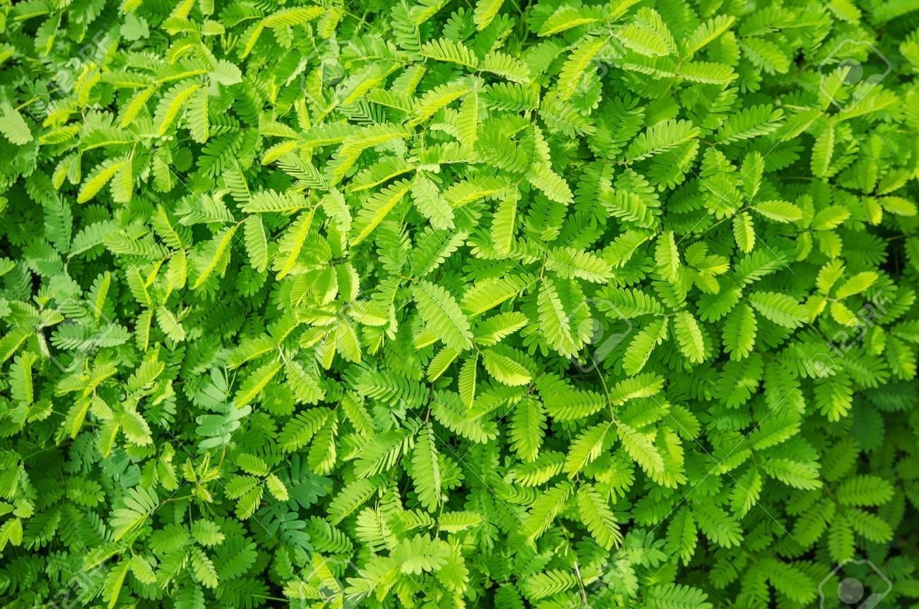 Fesselnde Grüne Pflanzen Referenz Von Grüne Blätter Hintergrund Textur Standard-bild - 44788952