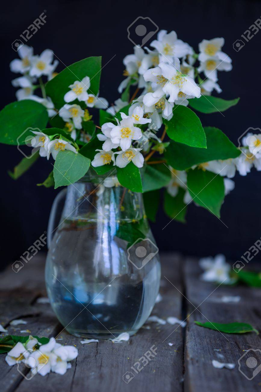 Stilllife Card With Jasmine Flowers In Glass Jar Separate Branches