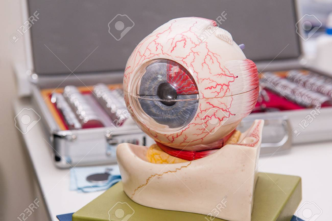Human Eye Anatomy Model On The Background Of Set Of Corrective ...