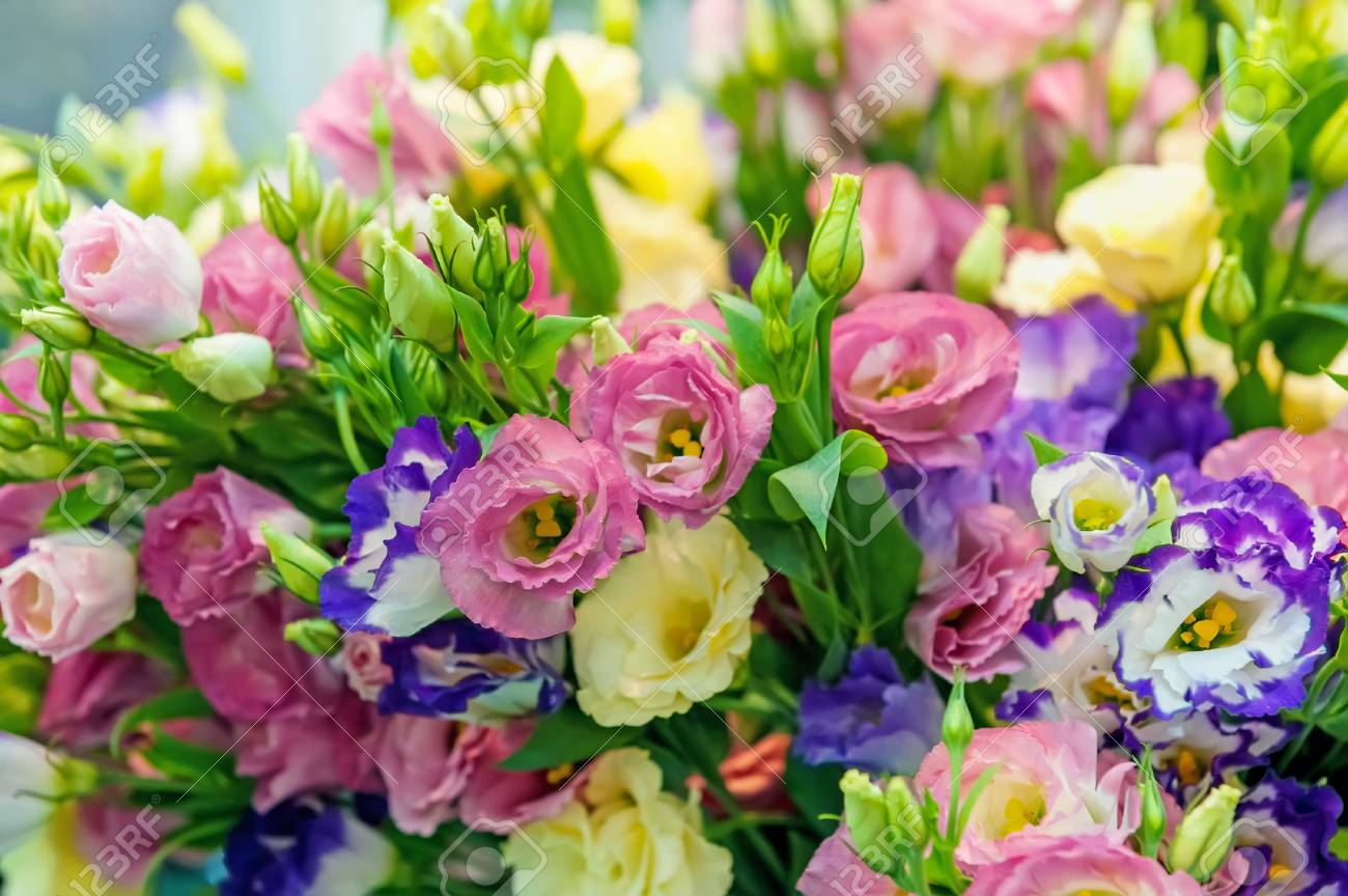 A Large Bouquet Of Multi-colored Alstroemerias In The Flower.. Stock ...