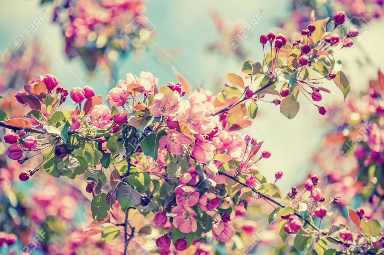 Spring Tree Branch With Small Pink Flowers Copy Space Vintage