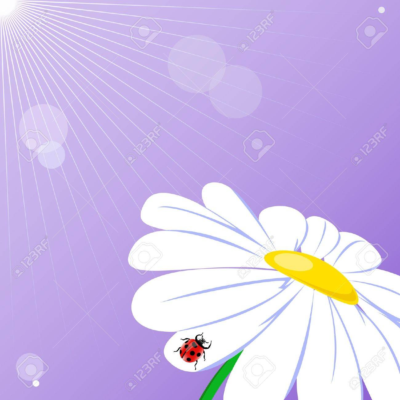 Camomile on the purple background Stock Vector - 14212355
