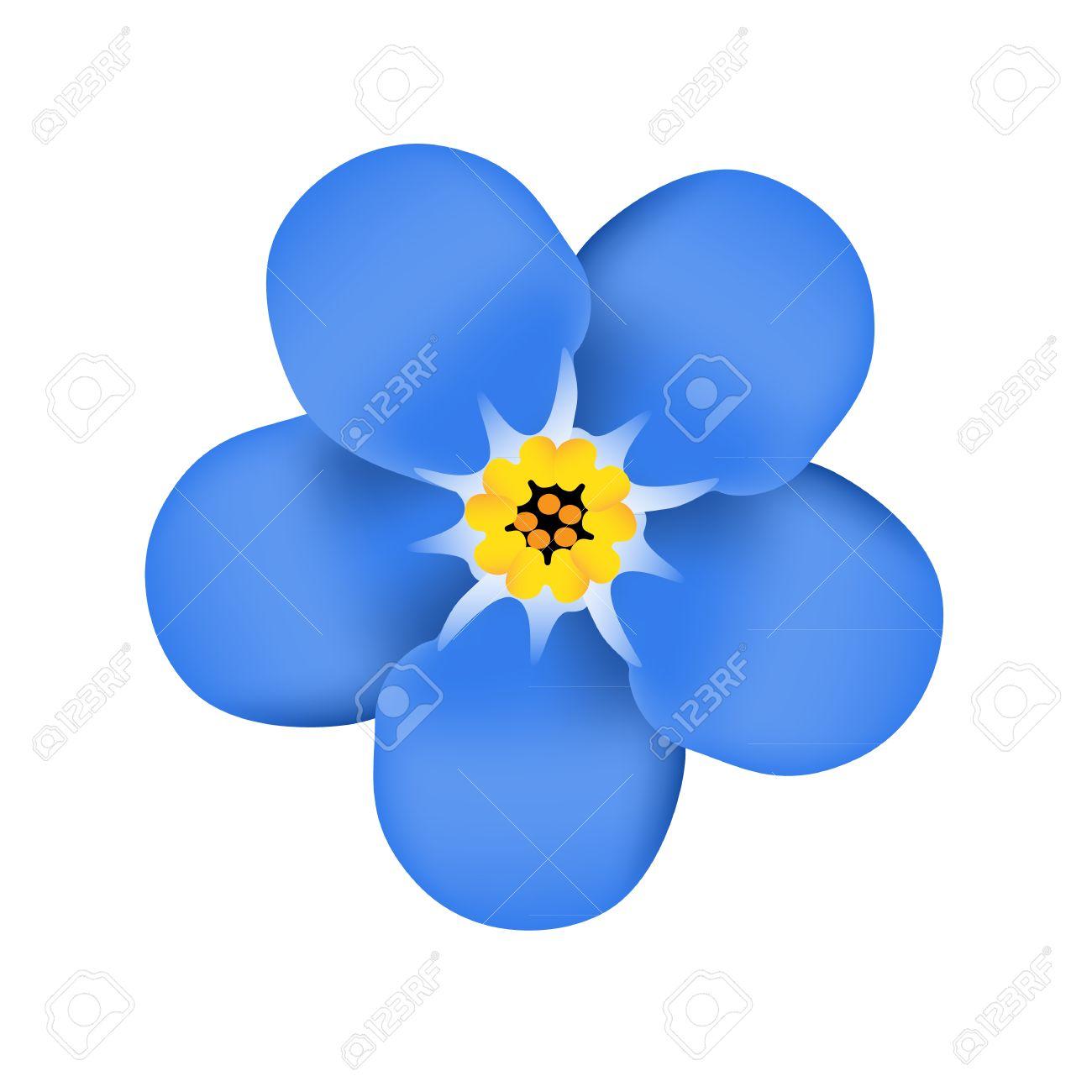 Forget Me Not Flower Blossom Blue Flower Vector Illustration