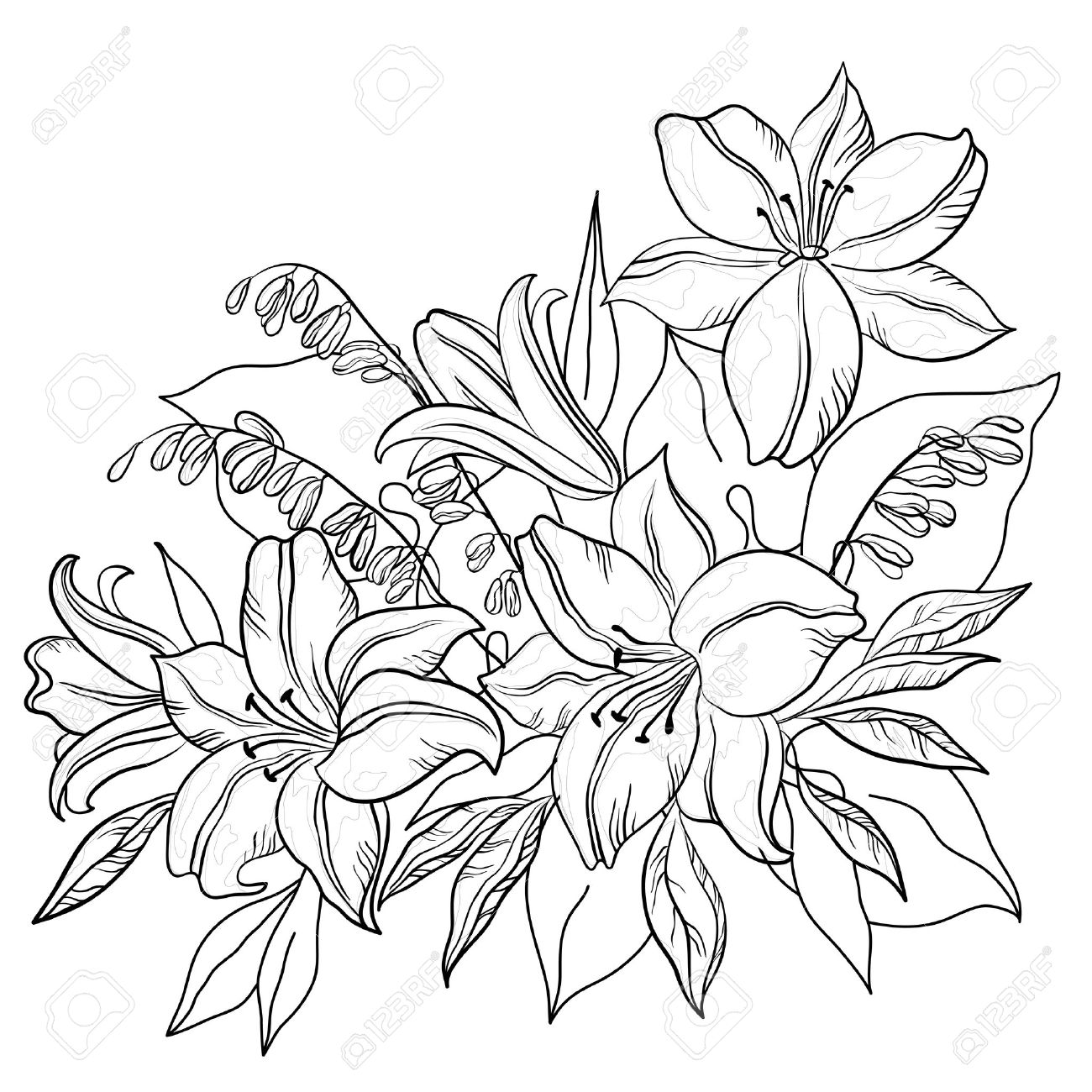 Lily Plant Drawing Flowers And Leaves Lily And