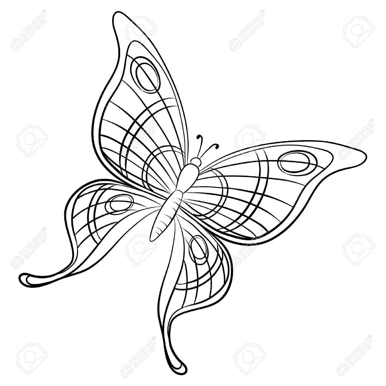 vector butterfly hand draw monochrome contours on a white