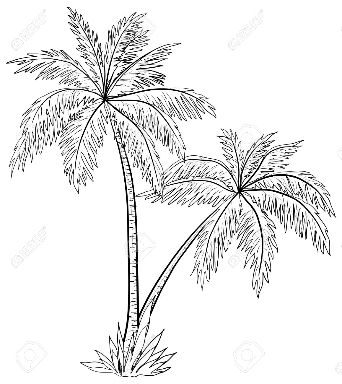 Vector, palm trees with leaves, monochrome contours on white background Stock Vector - 10588984