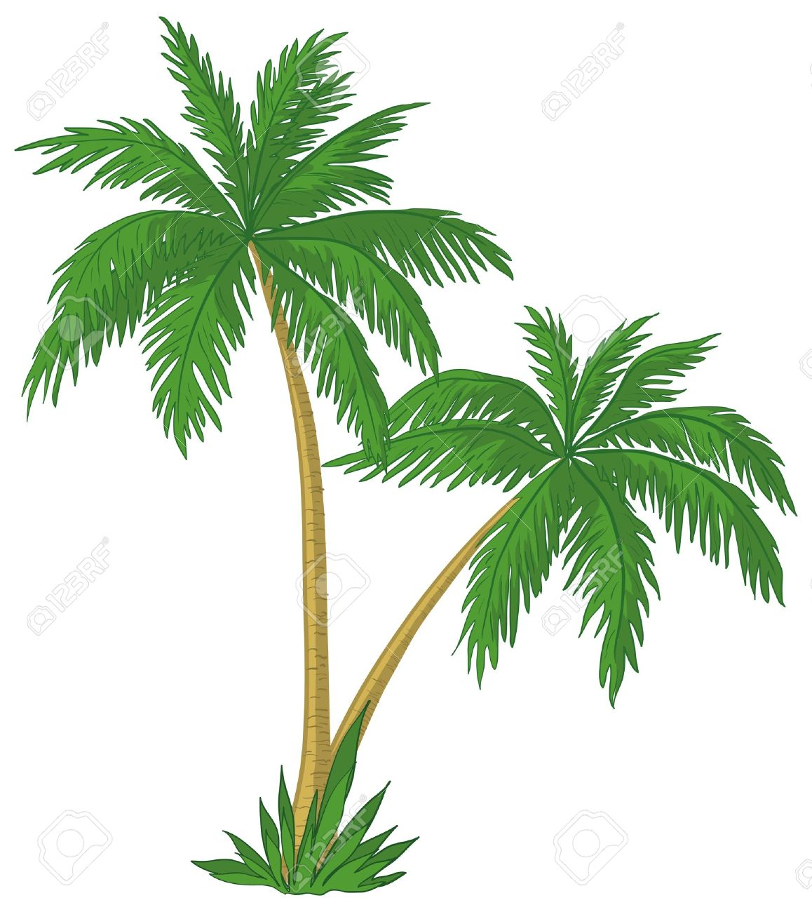 vector palm trees with green leaves on white background royalty rh 123rf com palm tree leaf free vector free vector palm tree illustration