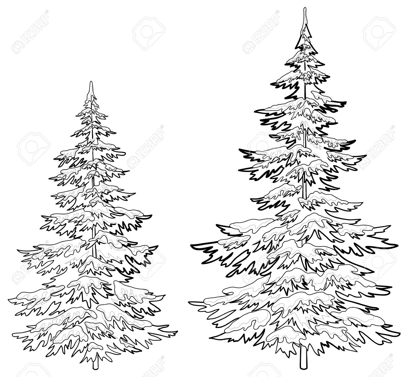 Vector, Christmas Trees Under Snow On A White Background, Contours ...