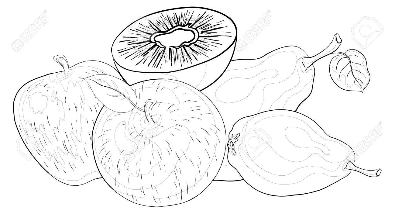 Still life, food, various fruits, contours on a white background: apples, pears, kiwi. Vector Stock Vector - 11529458