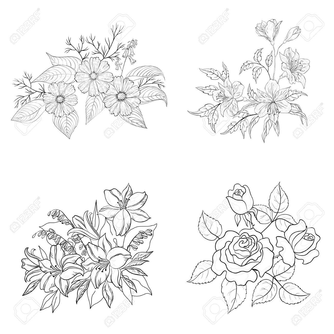 Ensemble De Fleurs Cultivees Contour Noir Sur Fond Blanc Rose Lys