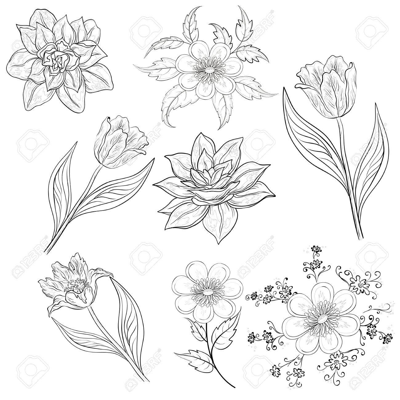 Set of flowers  tulip, narcissus, symbolical  Black contour on white background  Vector illustration Stock Vector - 14309162