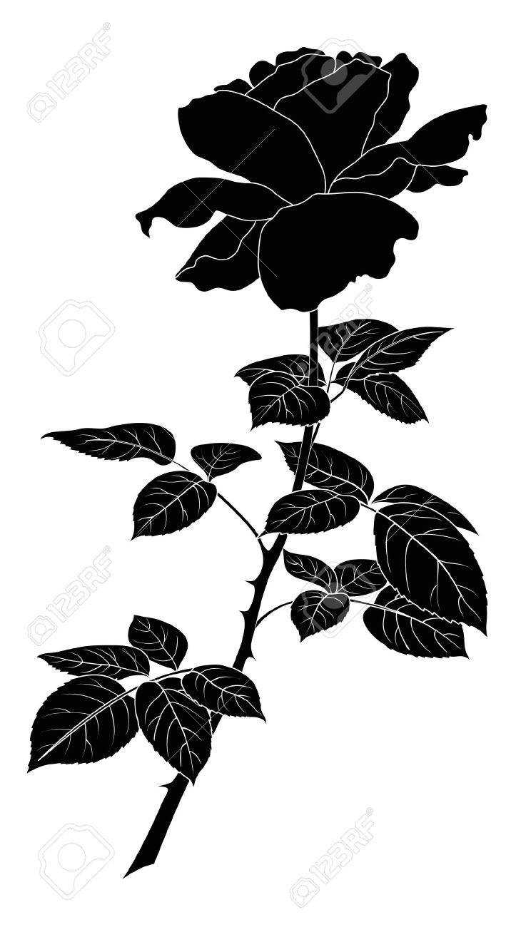 Flower rose, petals and leaves, black silhouette on white background  illustration Stock Vector - 14653758