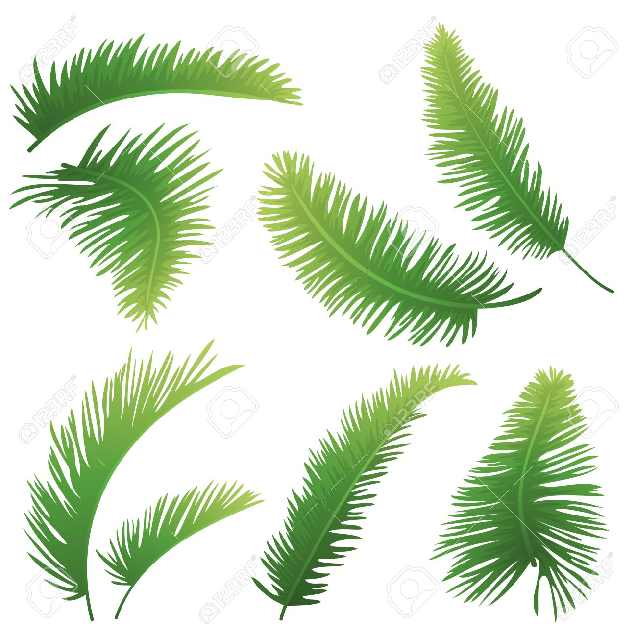 Set green branches with leaves of palm trees on a white background Drawn from life - 17962544