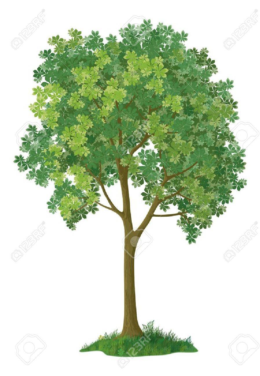 Chestnut green tree, isolated on white background, contains transparencies Vector - 18844804