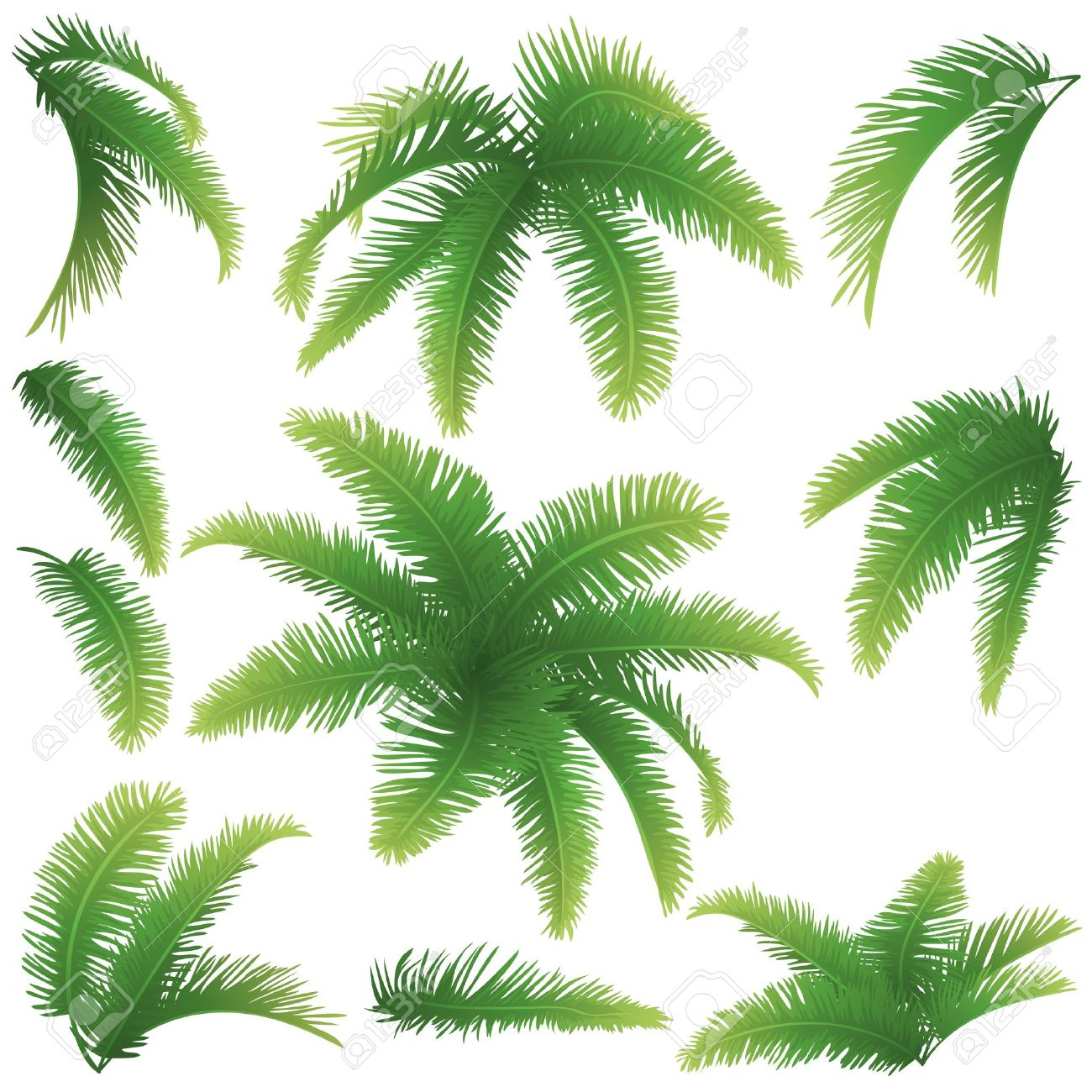 Set green branches with leaves of palm trees on a white background Drawn from life - 20190515