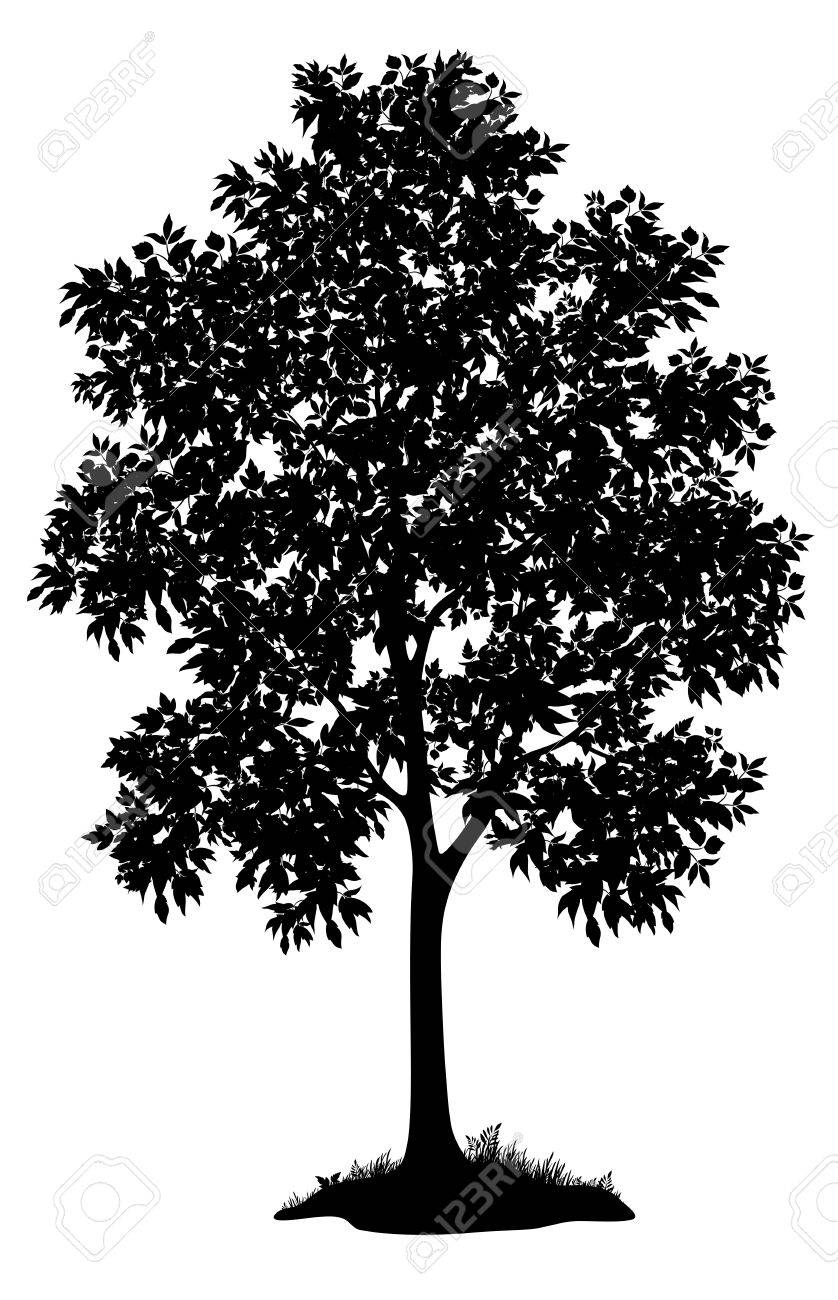 Maple tree with leaves and grass, black silhouette on white background Vector - 21463600