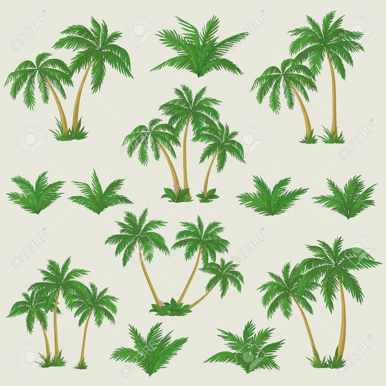 set tropical palm trees with green leaves, mature and young plants