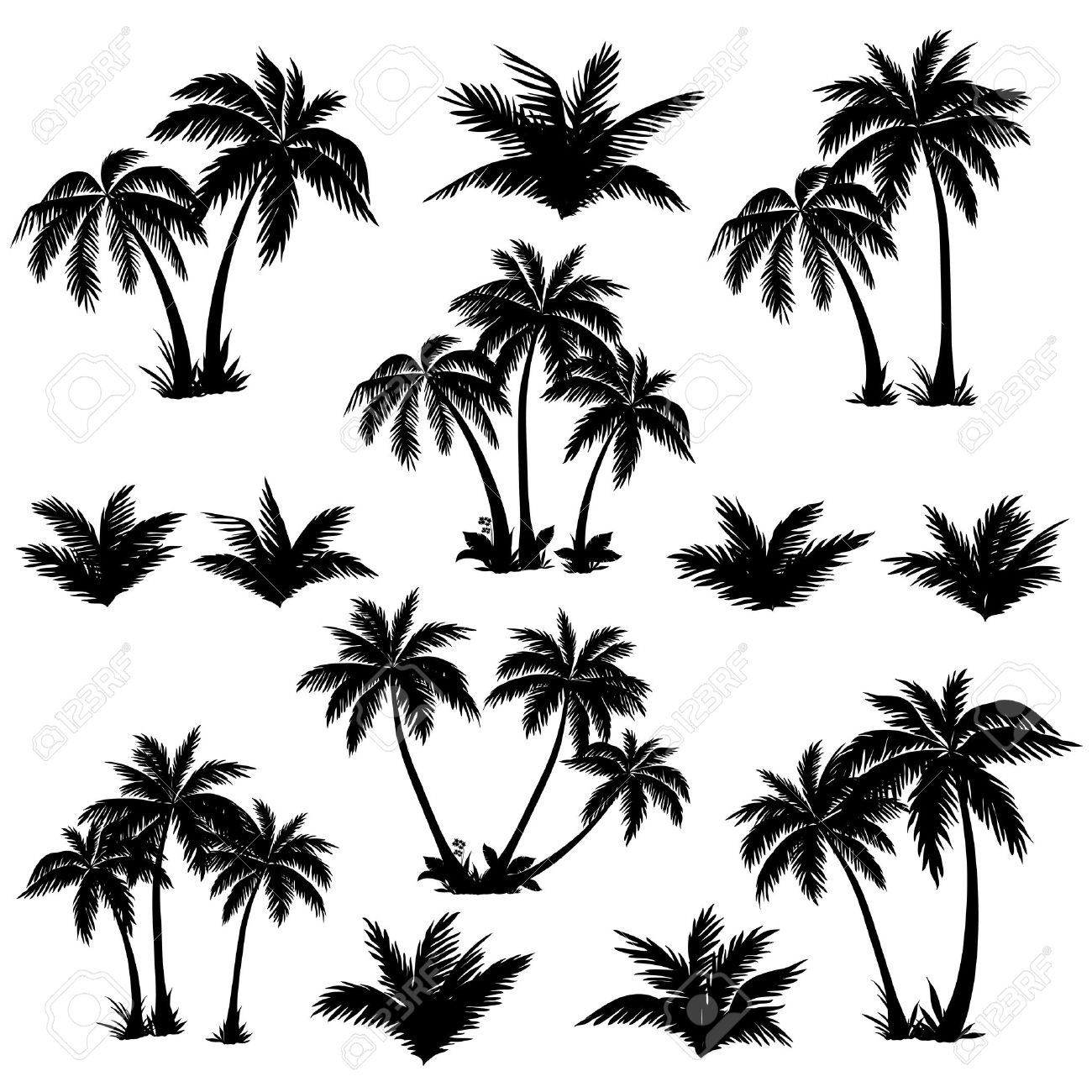 Set tropical palm trees with leaves, mature and young plants, black silhouettes isolated on white background Vector - 29836595