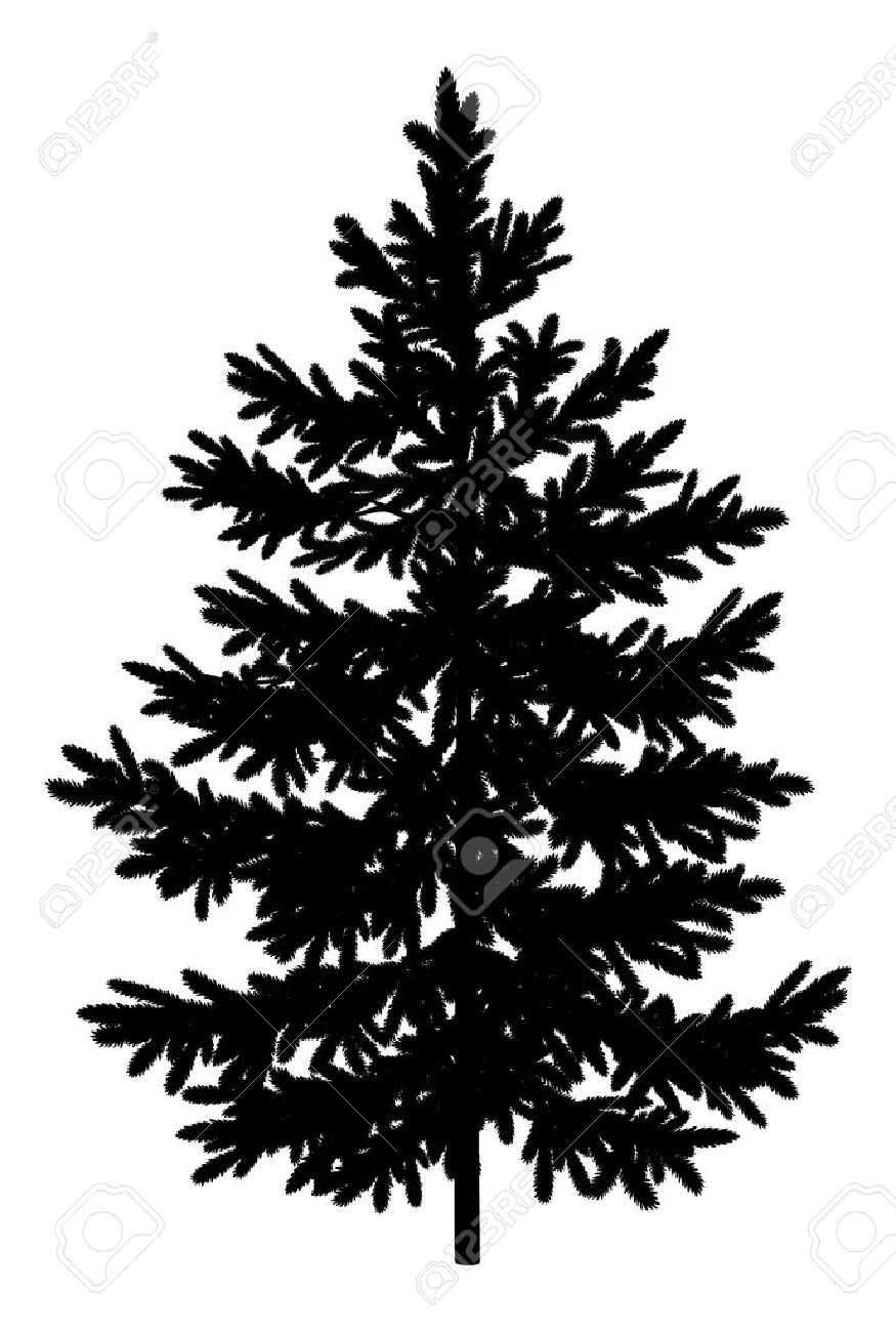 christmas spruce fir tree black silhouette isolated on white