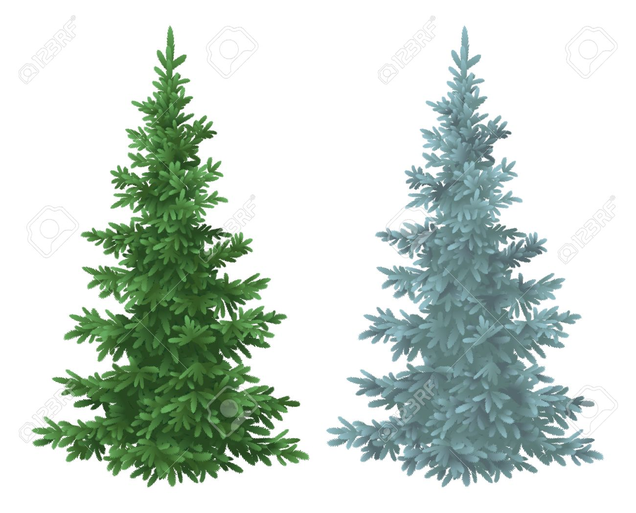 Green and blue Christmas spruce fir trees isolated on white background - 30731857
