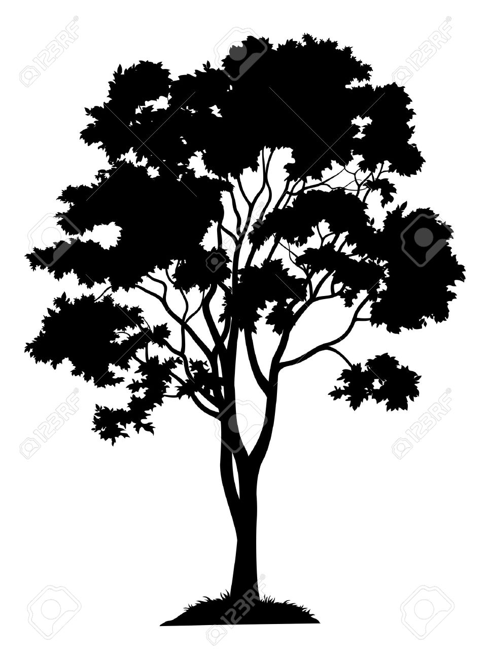 Maple tree with leaves and grass, black silhouette on white background. Vector - 34363719