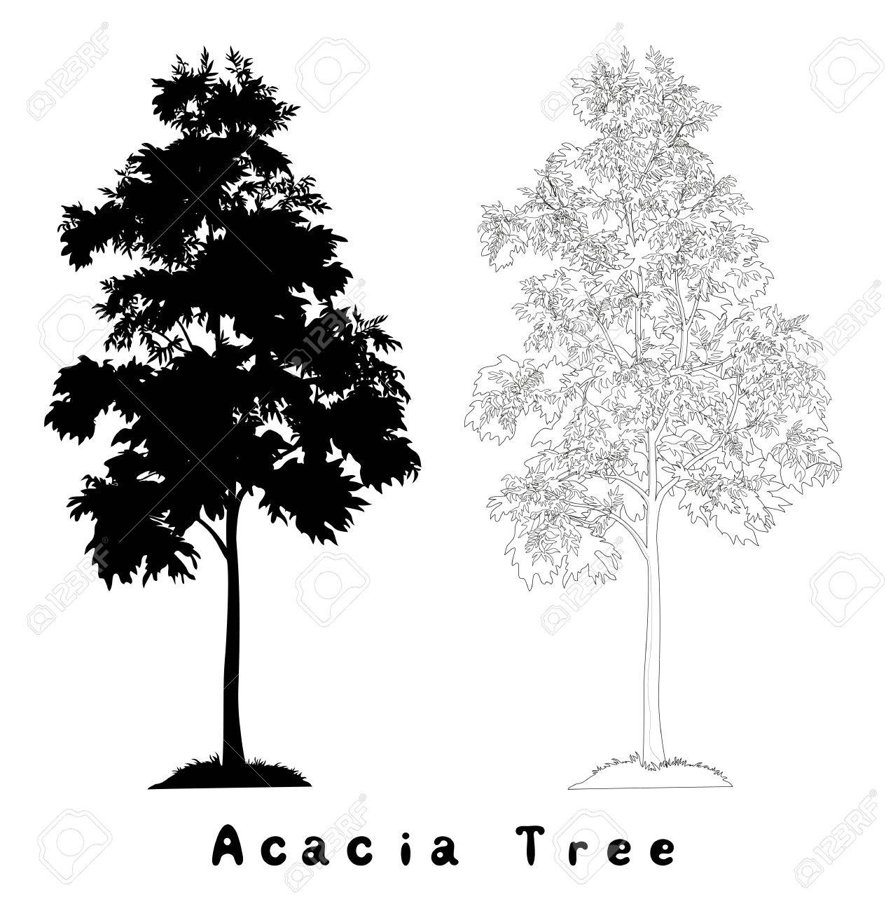 Acacia Tree Vectors Download Free Vector Art Stock Graphics - Vector acacia tree with leaves and grass black silhouette contours and inscriptions on white background