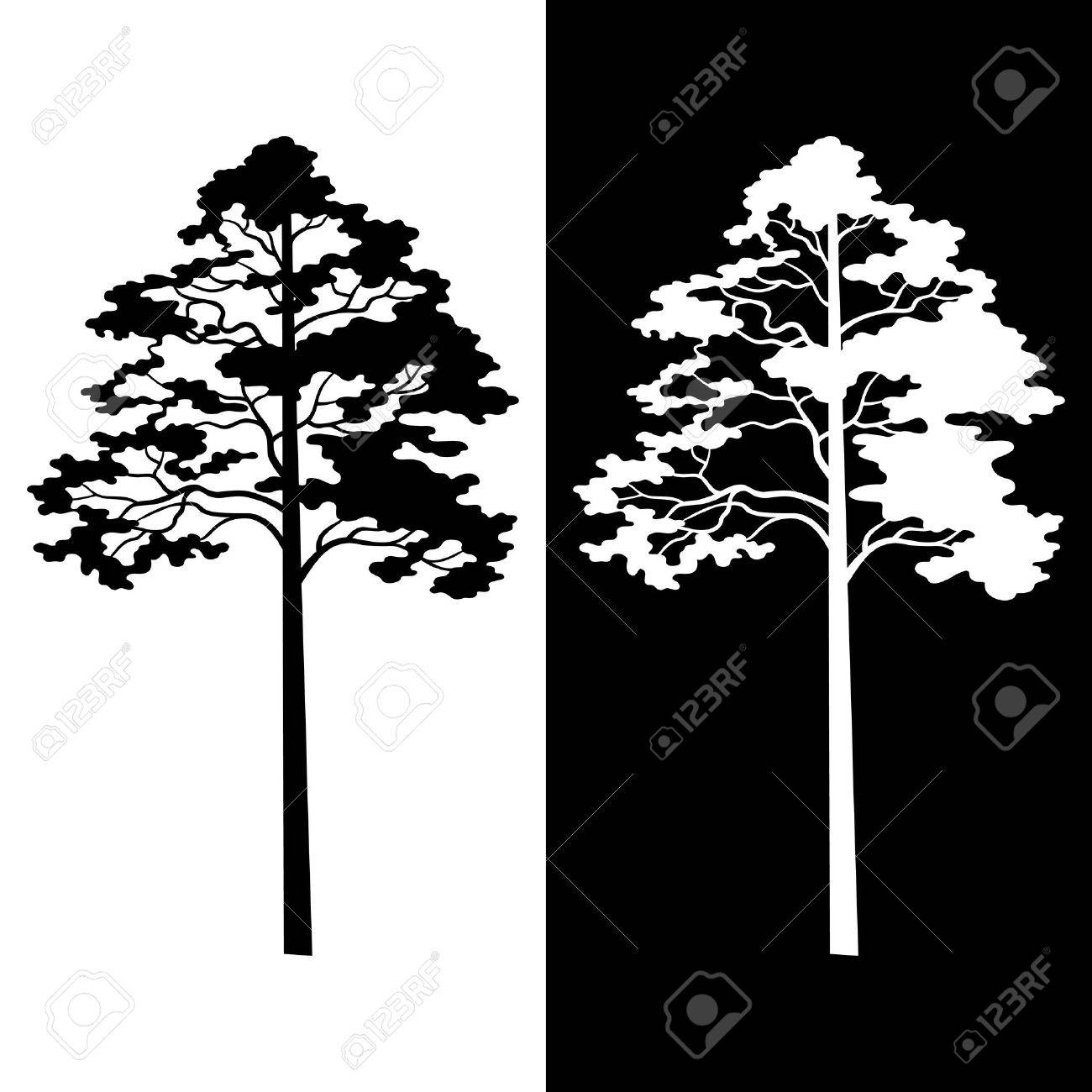 Pine Trees Black and White Silhouettes Isolated on Background. Vector - 39566686