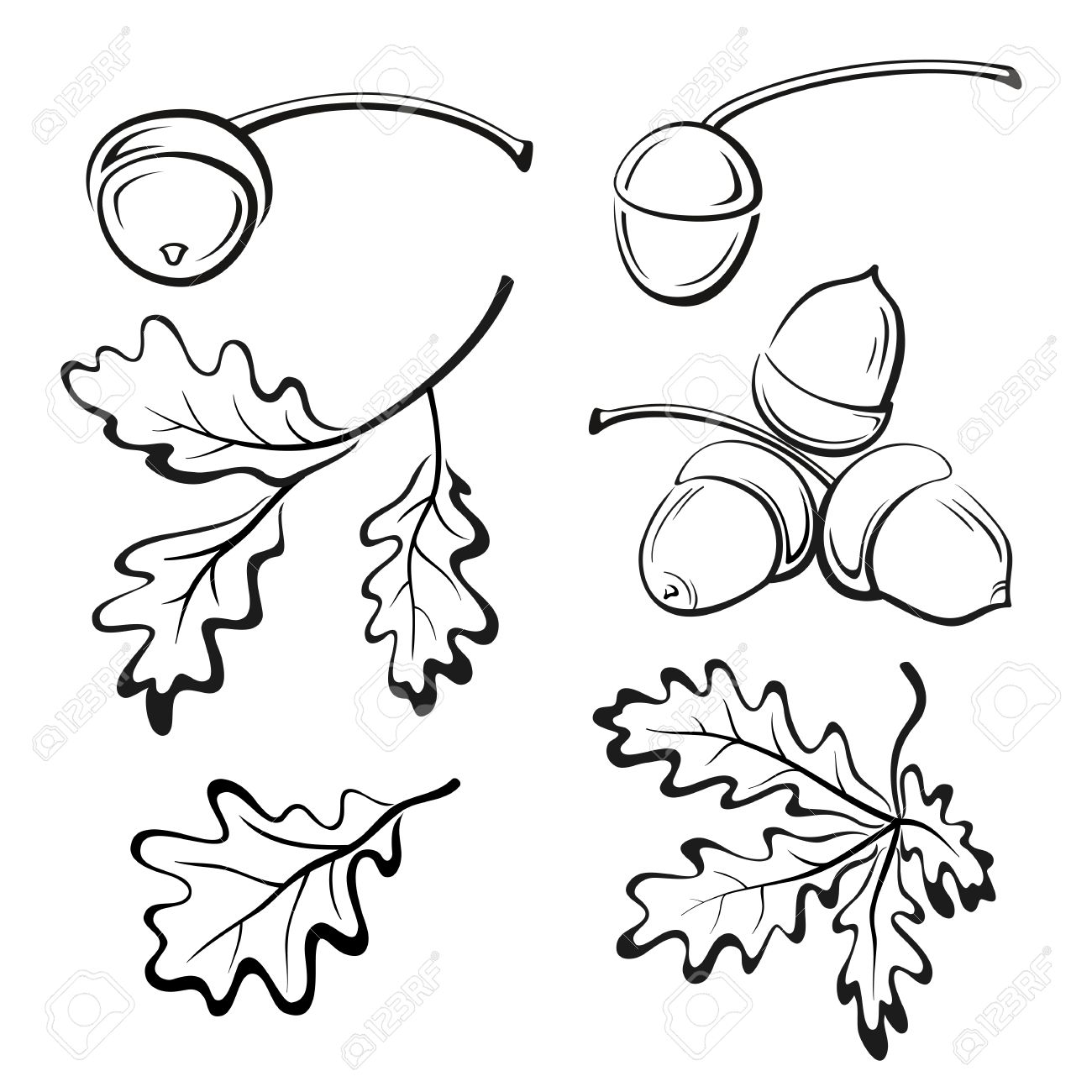 Set Oak Branches with Leaves and Acorns, Black Contour Pictograms Isolated on White Background. Vector - 47014471