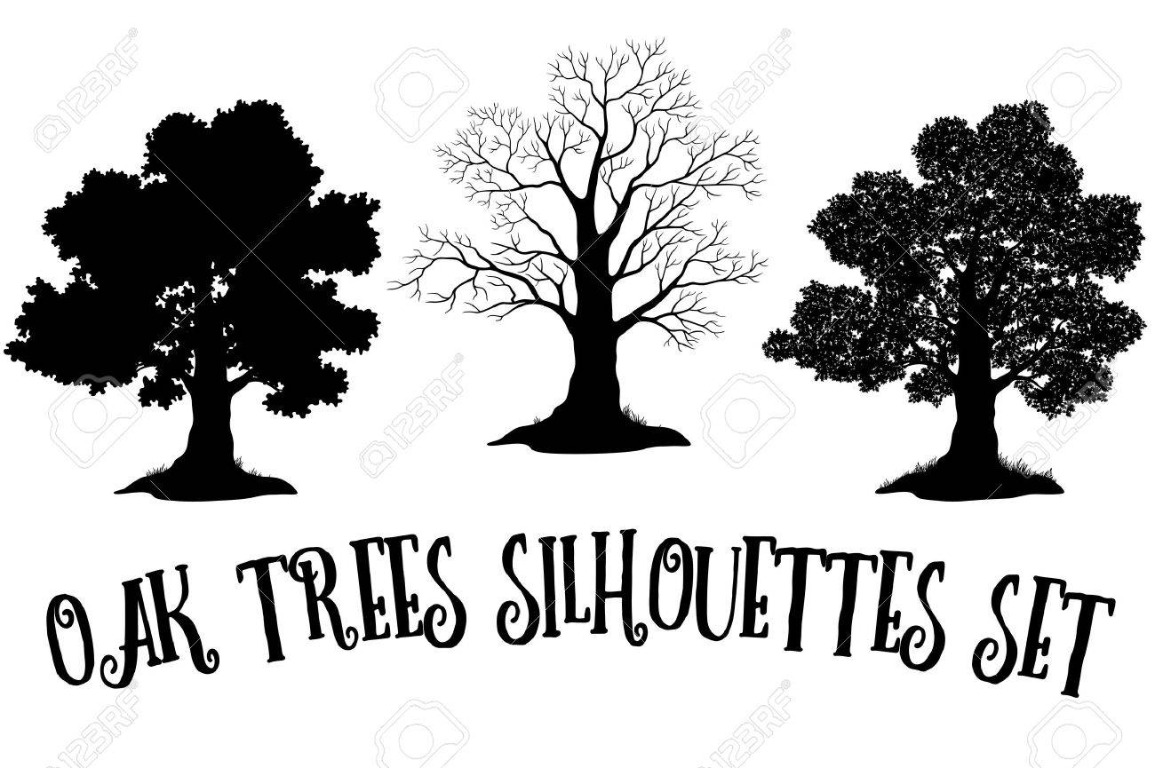 Set of Oak and Grass Silhouettes, Trees Without Leaves and Crowns Versions with Different Study of Details. Vector - 55393145