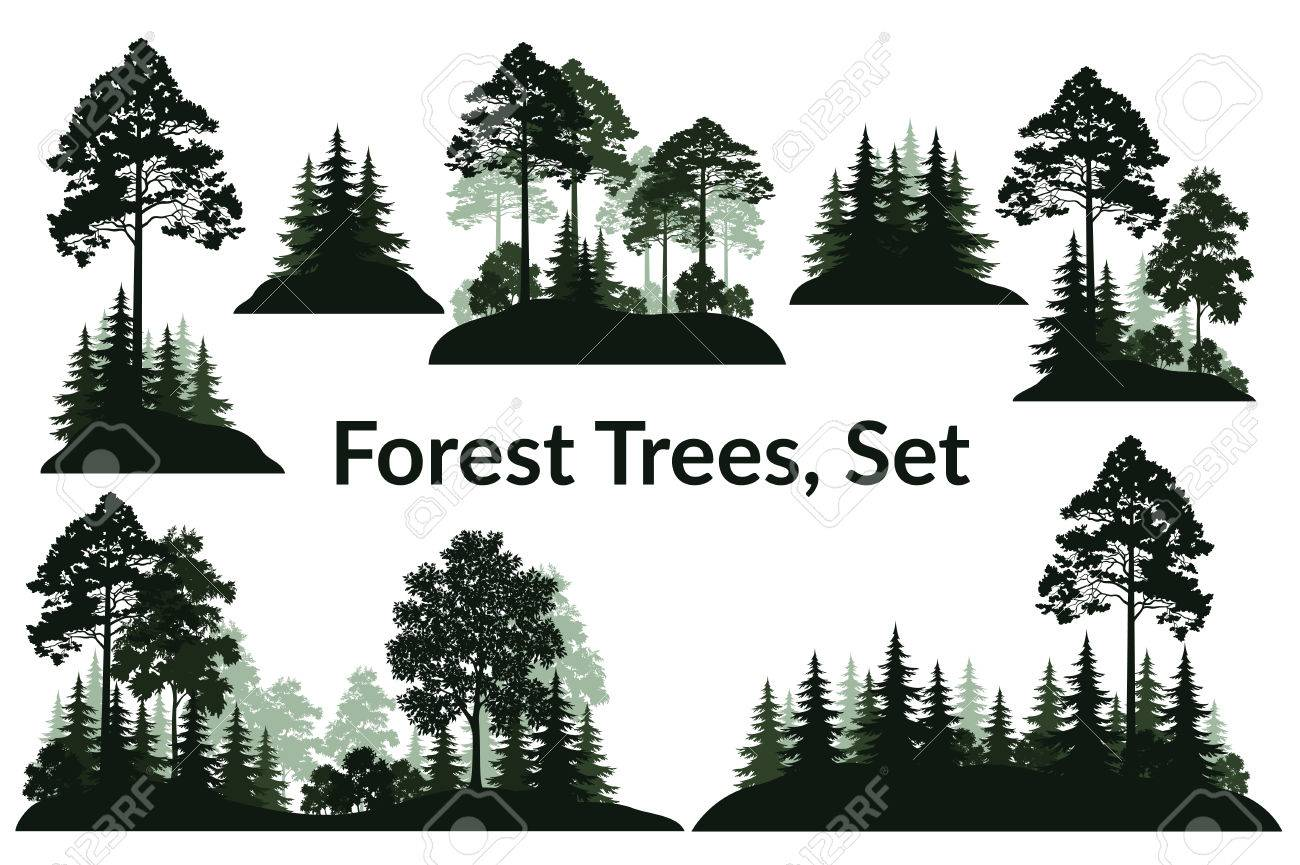 Set Isolated on White Background Landscapes, Green Coniferous and Deciduous Trees and Bushes Silhouettes, Fir, Pine, Maple, Acacia, Lilac. Vector - 73967502
