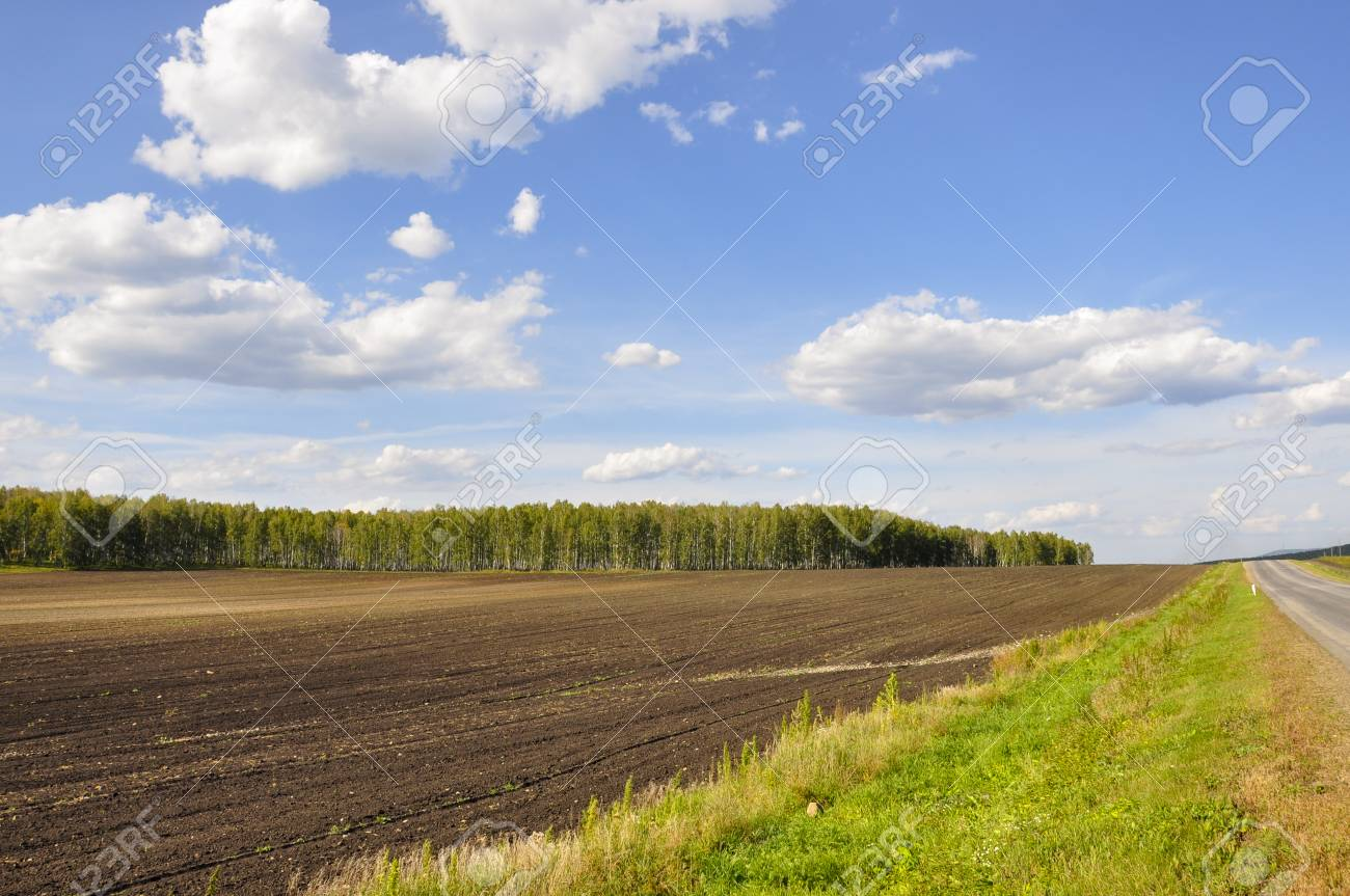 Black field with trees far away. Cultivated area. Agriculture. Bright blue sky and green grass - 121637864