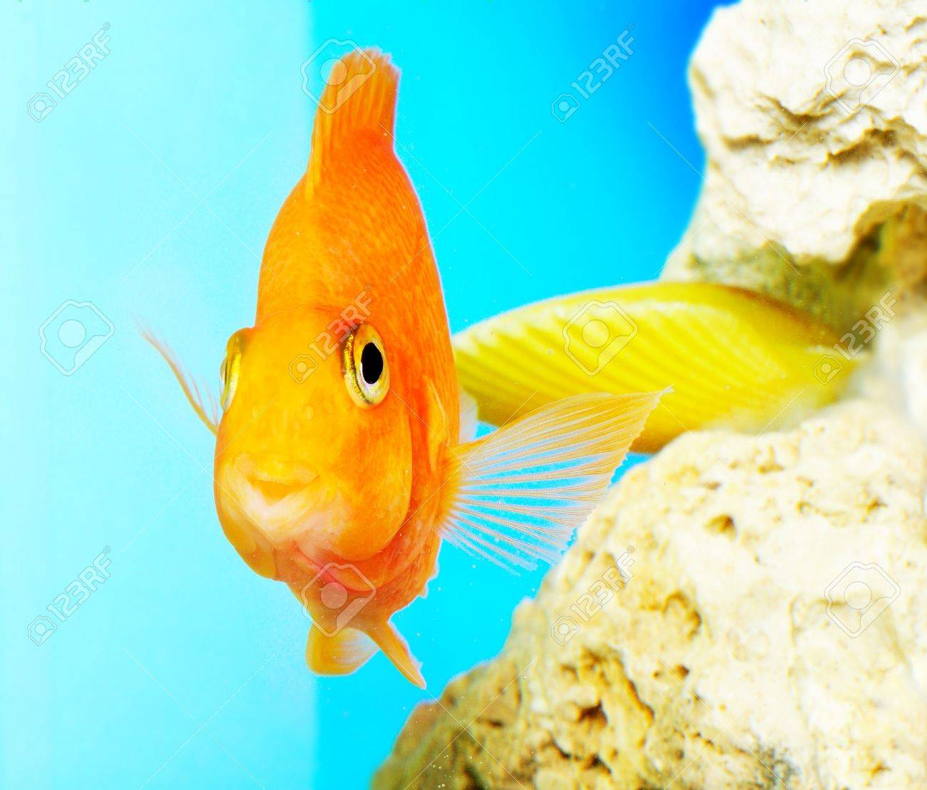 Parrot fish Stock Photo - 12969151
