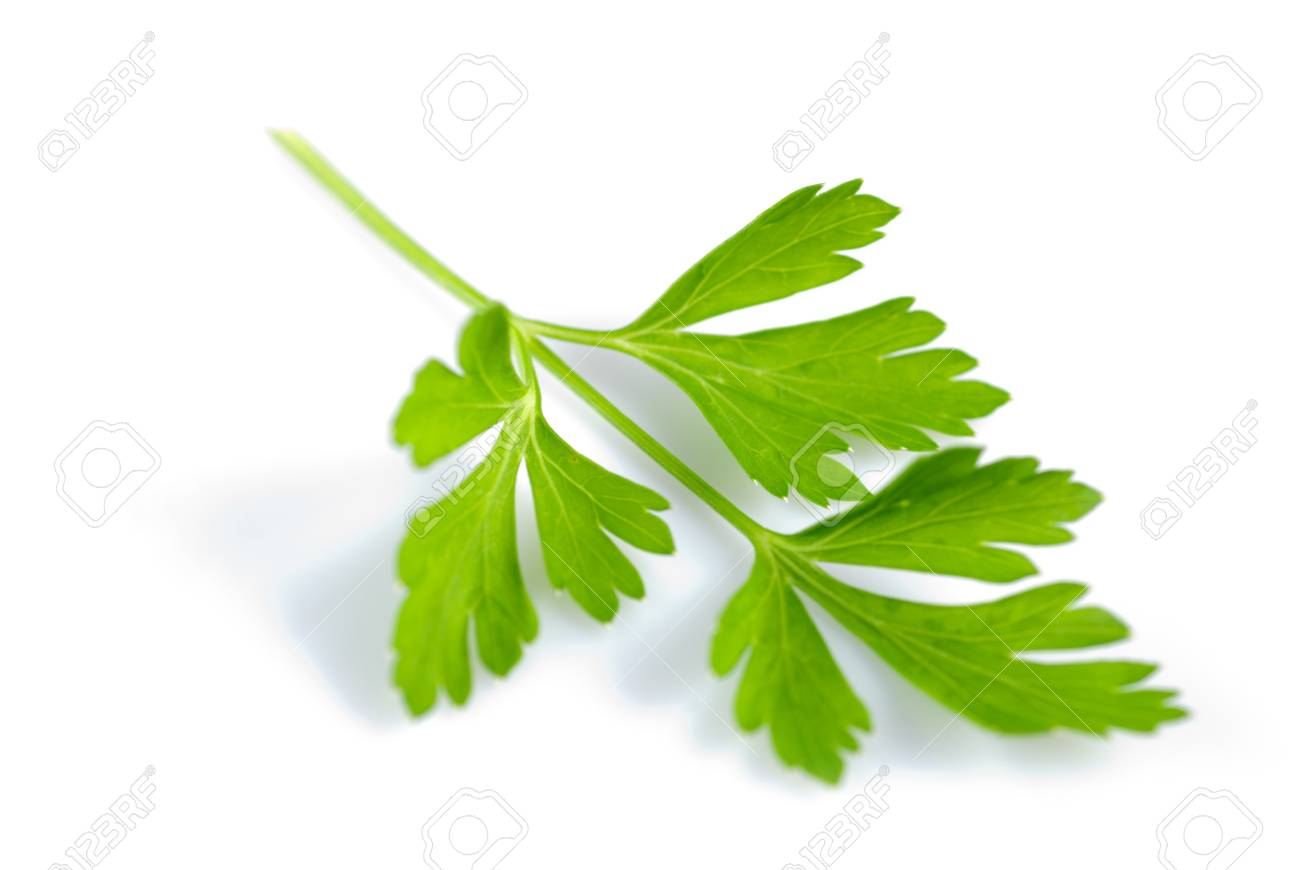 Twig of green parsley isolated on white close up. Selective focus Stock Photo - 7768582