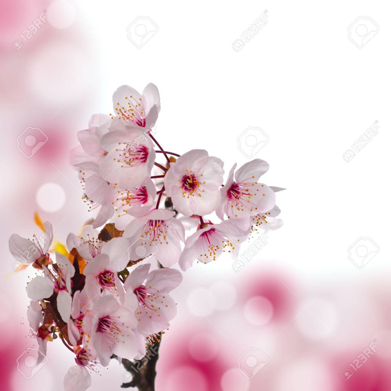Immagini Stock Macro Di Apple Blossom Basse Profondità Di Campo