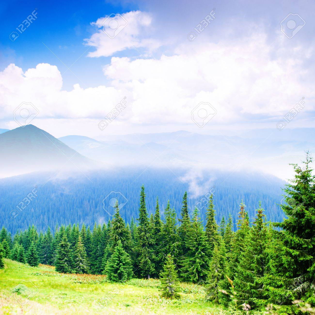 Beautiful blue sky and green grass and forest in Carpathian mountains Stock Photo - 12830218