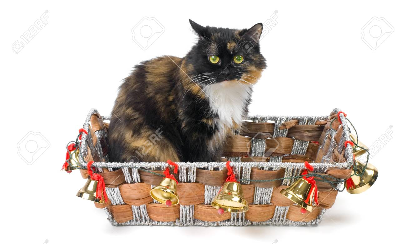 Domestic cat sitting in a Christmas basket Stock Photo - 8135544
