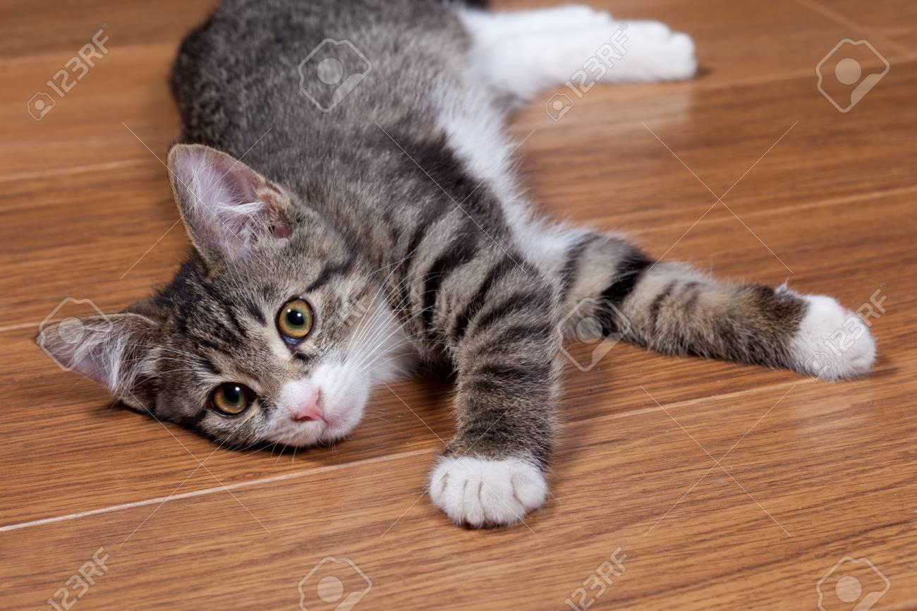 The sleepy kitten lies on wooden to a floor Stock Photo - 10325274