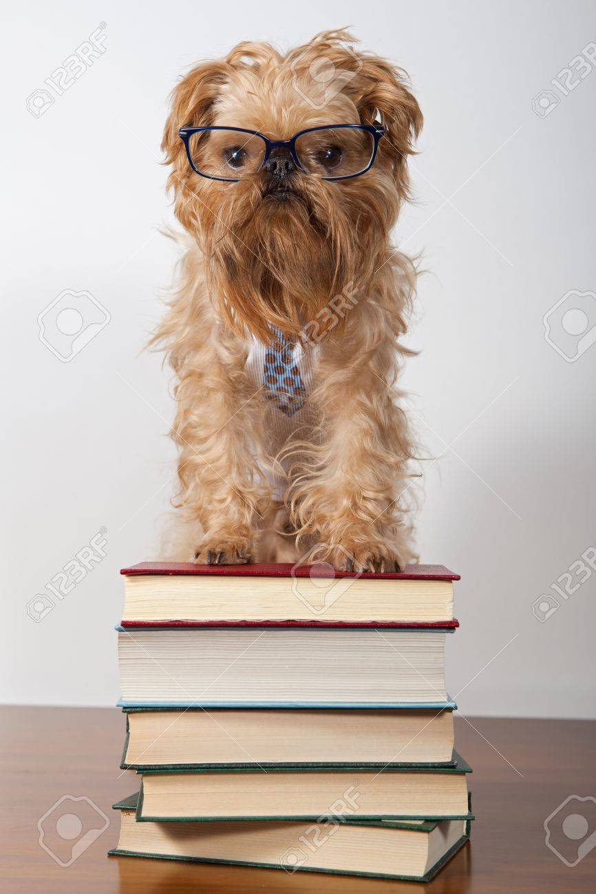 Serious dog in the glasses is on the books Stock Photo - 13036016