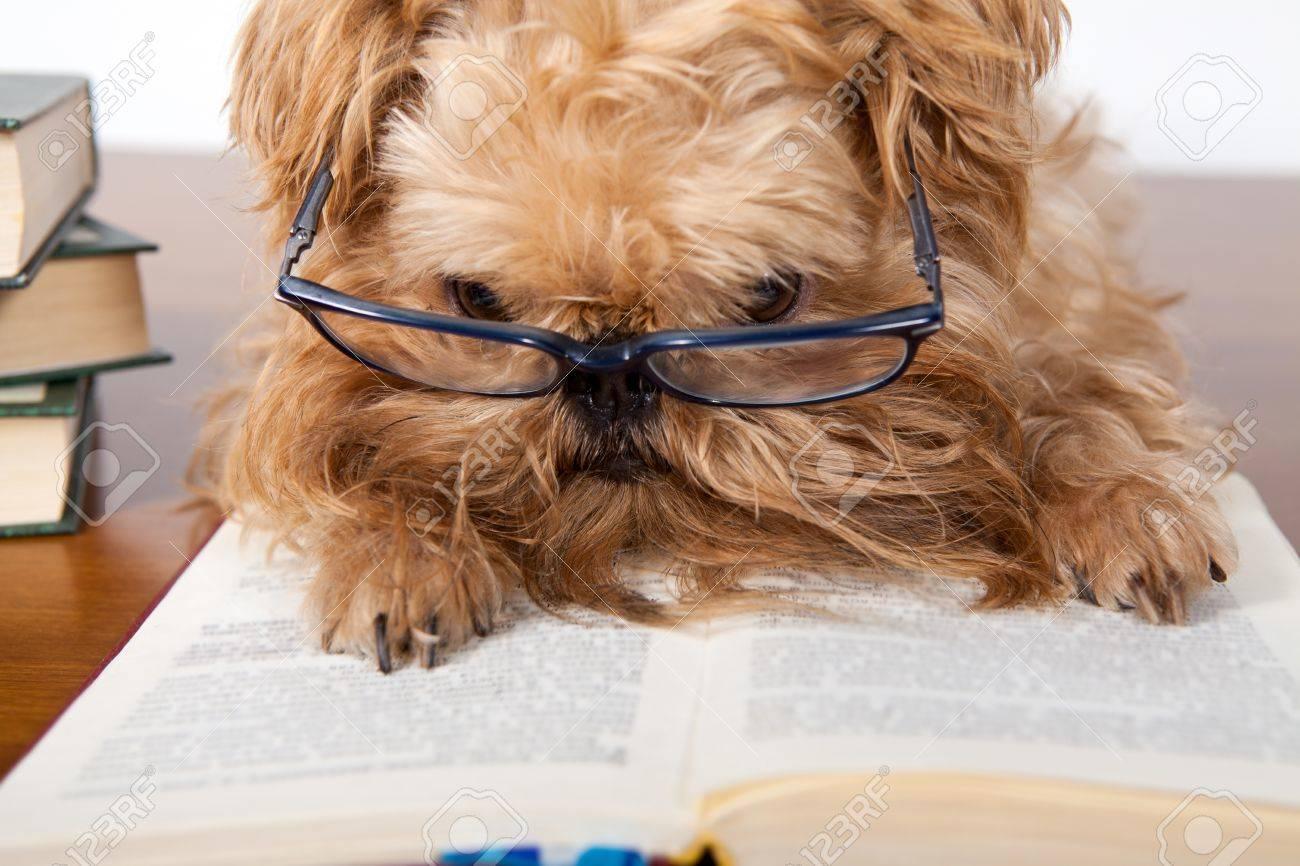「本を読む犬」の画像検索結果