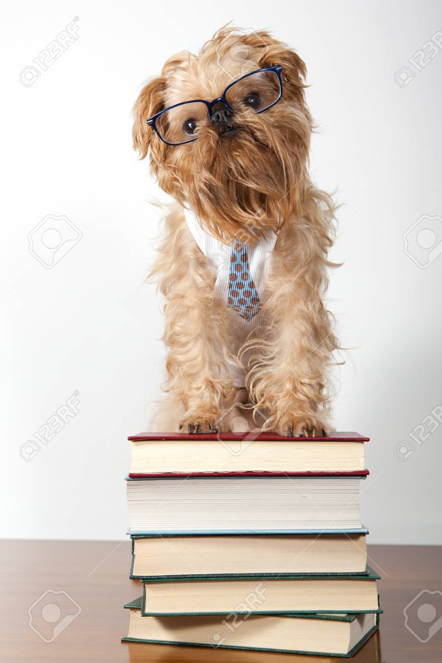 Serious dog in the glasses is on the books Stock Photo - 13141796