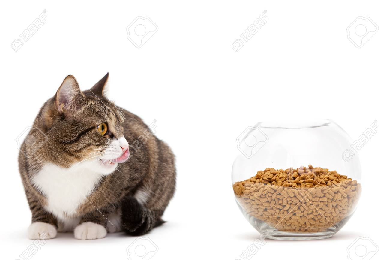 Striped, gray cat and a heap of dry food Stock Photo - 18245917
