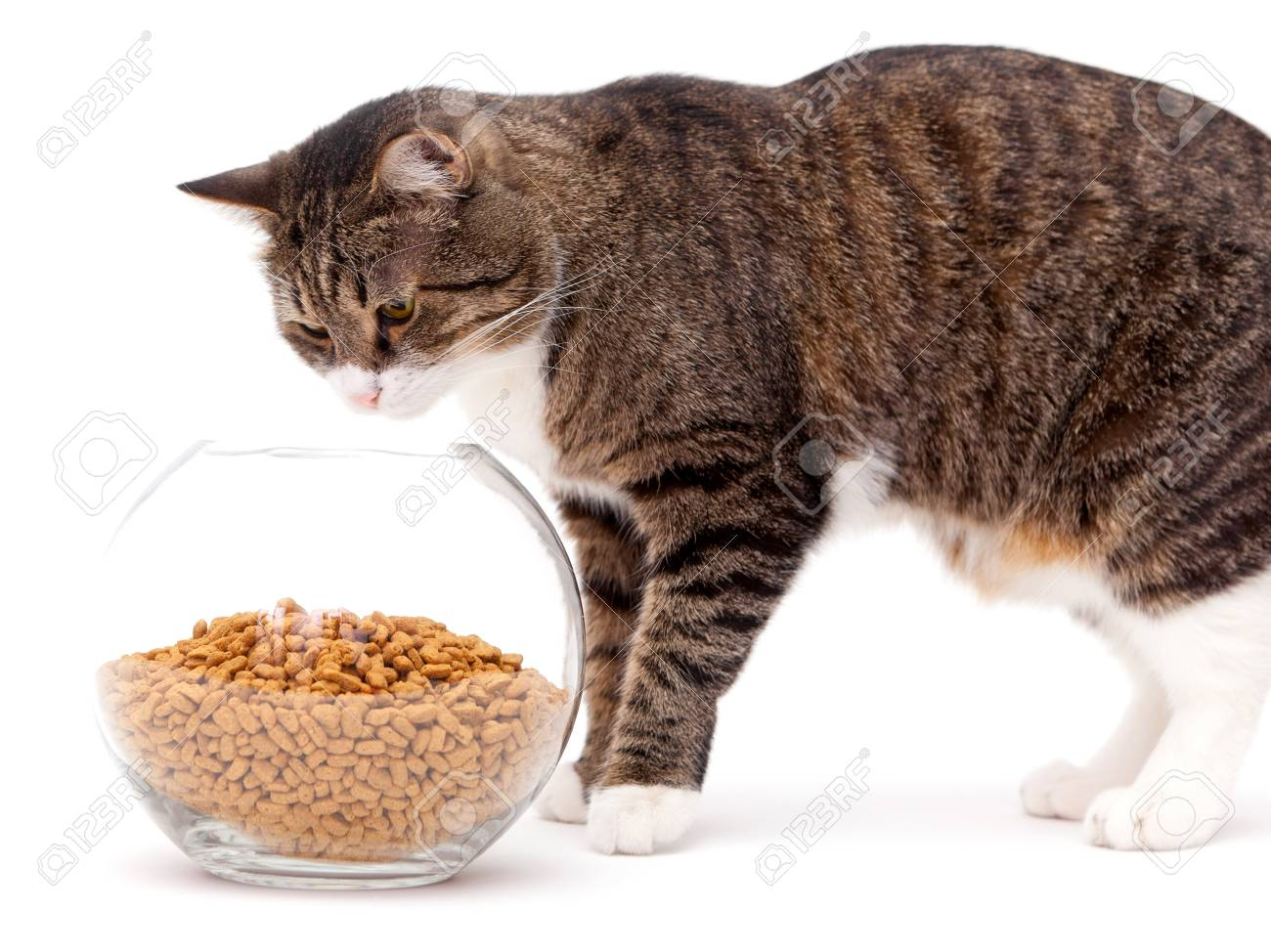 Striped, gray cat and a heap of dry food, isolated on white Stock Photo - 18385725