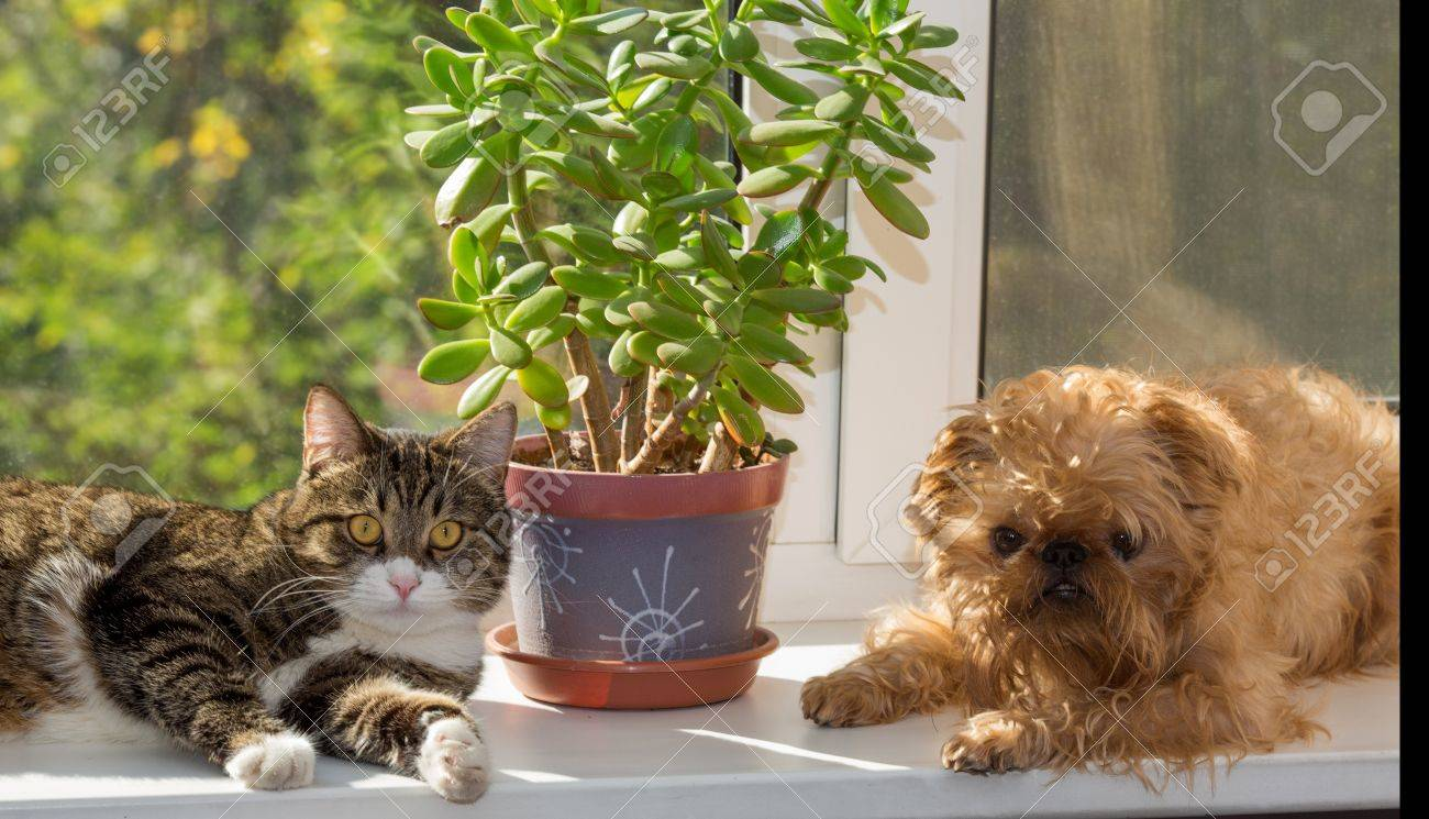 Cat and dog on the window bask in the sunshine Stock Photo - 21771909