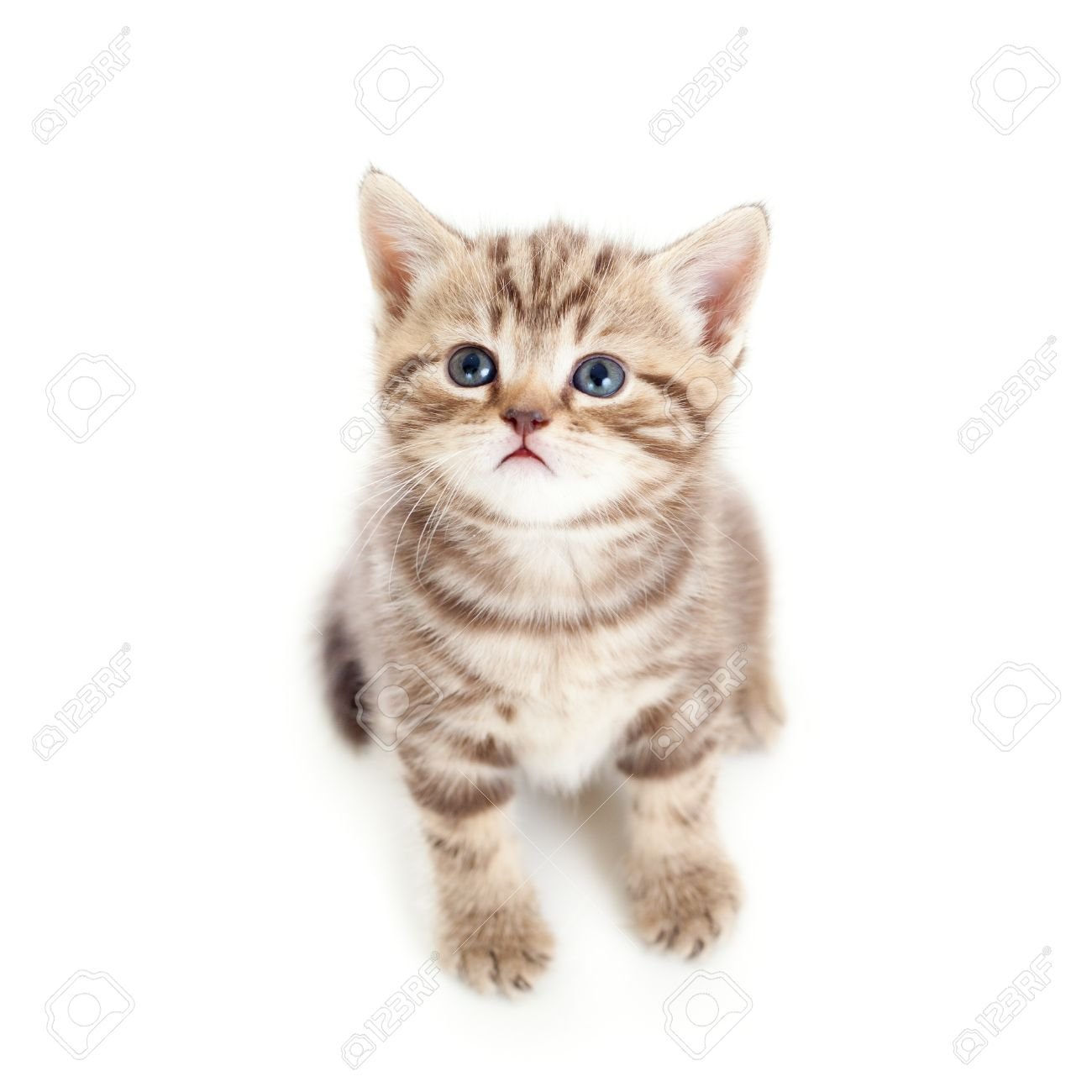 top view of baby cat isolated on white background Stock Photo - 14192061